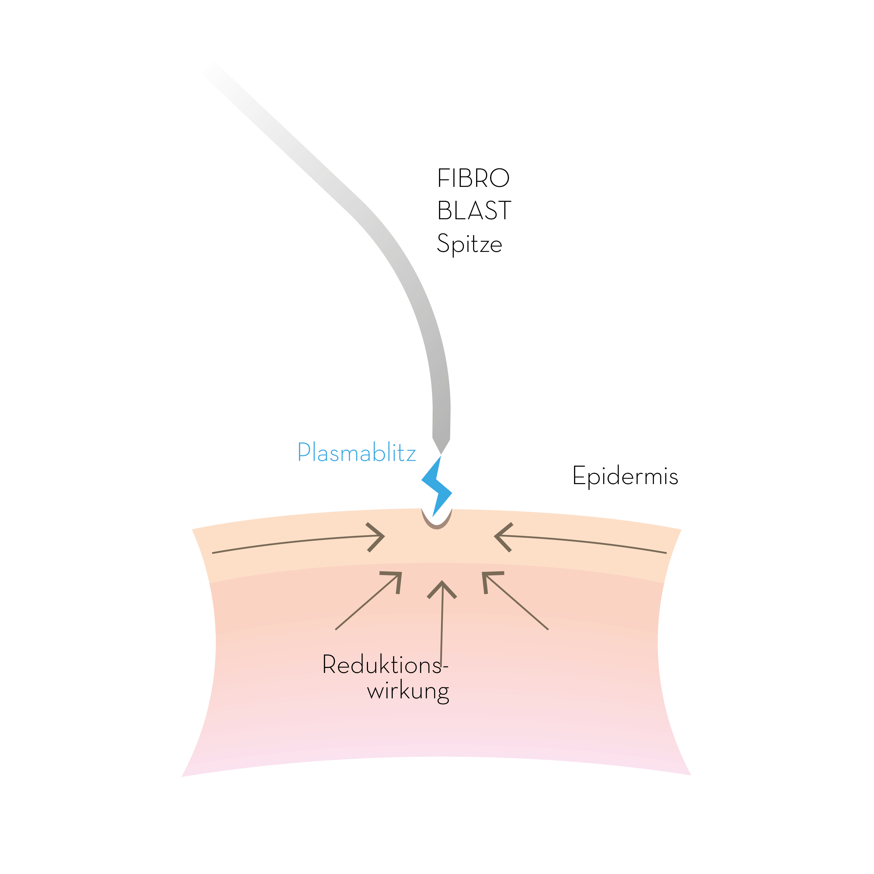 PB FIBROBLAST-Illustration 01